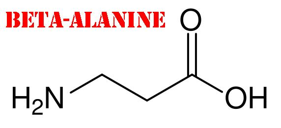 beta-alanin-1
