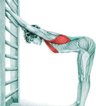 10 упражнений на растяжку: как мышцы тянутся на самом деле. Часть II. Изображение номер 9