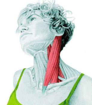 10 упражнений на растяжку: как мышцы тянутся на самом деле. Часть II. Изображение номер 1