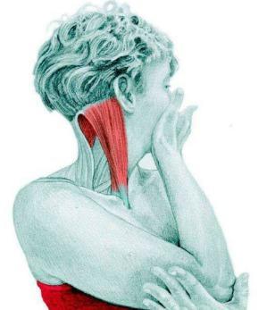 10 упражнений на растяжку: как мышцы тянутся на самом деле. Часть II. Изображение номер 2