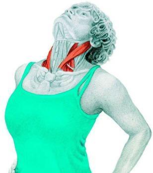 10 упражнений на растяжку: как мышцы тянутся на самом деле. Часть II. Изображение номер 3