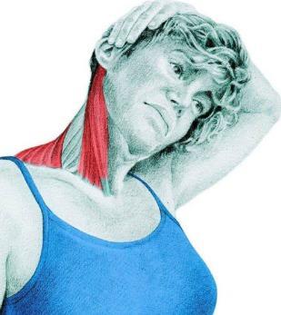 10 упражнений на растяжку: как мышцы тянутся на самом деле. Часть II. Изображение номер 4