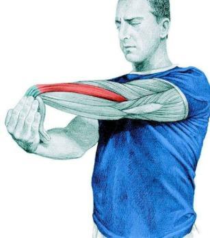 10 упражнений на растяжку: как мышцы тянутся на самом деле. Часть II. Изображение номер 5