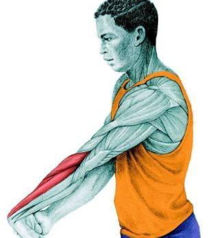 10 упражнений на растяжку: как мышцы тянутся на самом деле. Часть II. Изображение номер 6