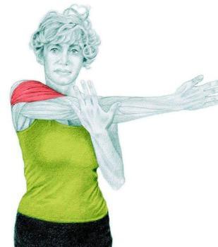 10 упражнений на растяжку: как мышцы тянутся на самом деле. Часть II. Изображение номер 7