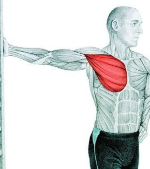 10 упражнений на растяжку: как мышцы тянутся на самом деле. Часть II. Изображение номер 8