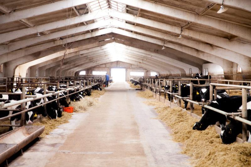 6 фактов о молочной продукции, о которых вы не знали. Изображение номер 5