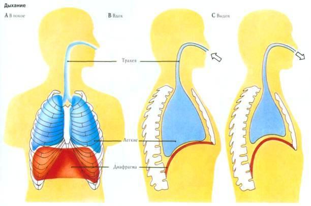 Дыхательная техника при вирусных заболеваниях